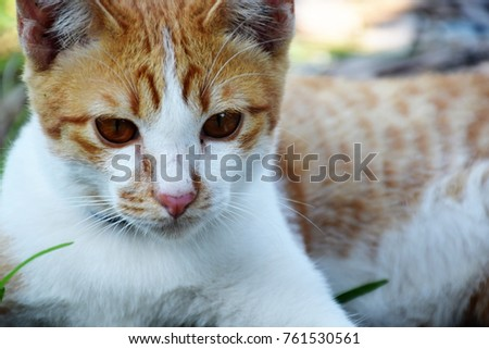 cute tabby cat close up