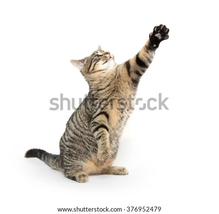 Cute tabby cat jumping and playing isolated on white background - stock photo