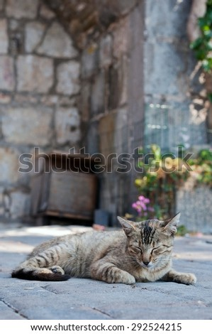 Cute tabby cat laying on the ground. Vertical photo