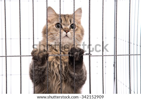 Cute tabby cat looking in a cage on white background isolated - stock photo