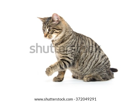 Cute tabby cat playing and jumping isolated on white background - stock photo