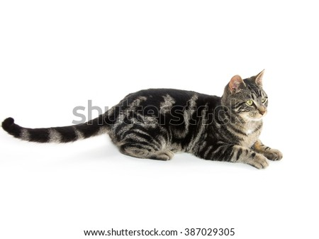 Cute tabby cat playing down isolated on white background - stock photo