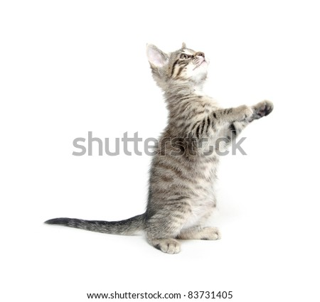 Cute tabby cat playing on white background