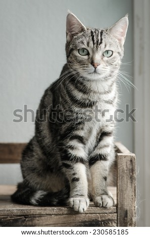 Cute tabby cat sitting and looking on old wood shelf - stock photo