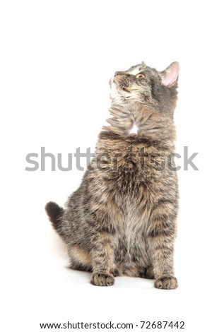 Cute tabby cat sitting on white background