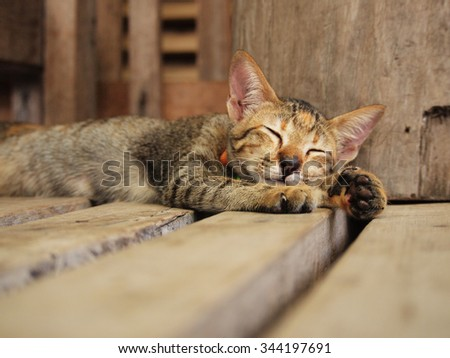 Cute tabby cat sleeping on the wood planks - stock photo