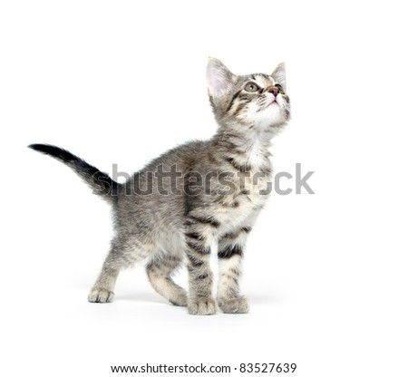 Cute tabby cat standing on white background