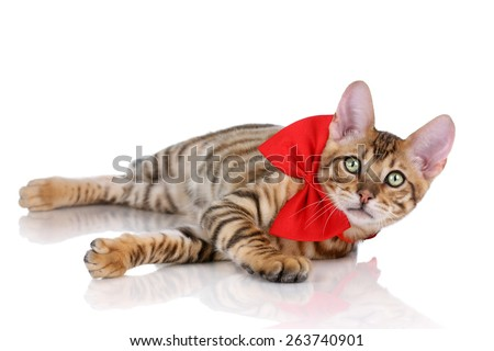 Cute tabby cat with a red bow lying on a white background - stock photo