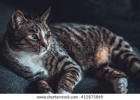 Cute tabby cat with green eyes, pretty stripes and a ginger belly lying resting and staring off into the distance - stock photo