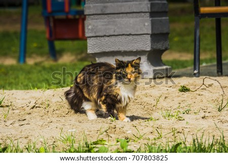 Cute tabby cat with long fur walking outdoor.
