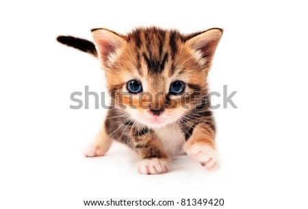 Cute tabby kitten - stock photo