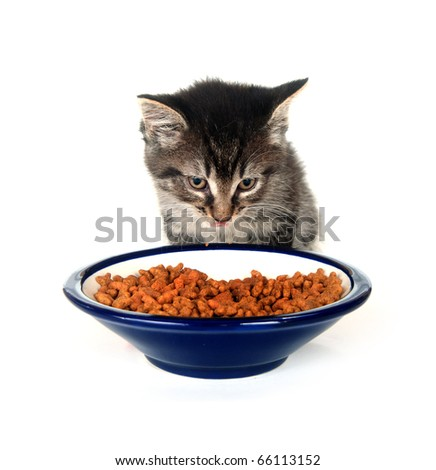 Cute tabby kitten eating food from a bowl on white background