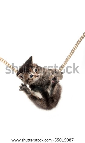 Cute tabby kitten grasping a rope