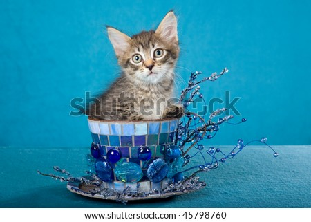Cute tabby kitten in oversized blue cup on blue background - stock photo