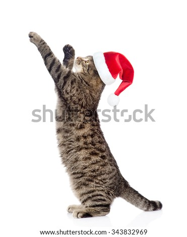 Cute tabby kitten in red christmas hat standing on hind legs and leaping. isolated on white background - stock photo