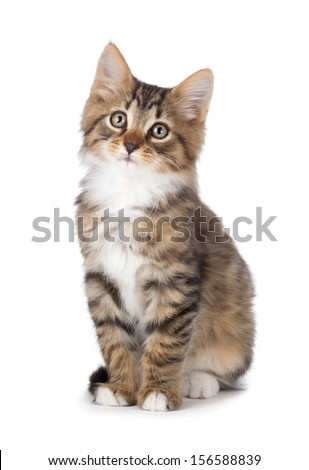 Cute tabby kitten isolated on white. - stock photo