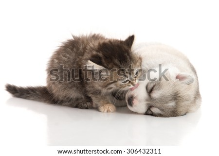 Cute tabby kitten kissing cute puppy  on white background isolated