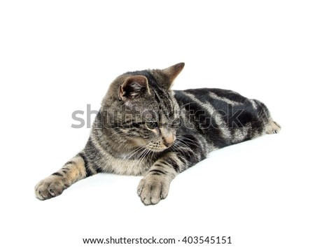 Cute tabby kitten laying down with paws over edge of table on white background