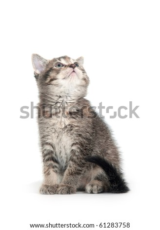 Cute tabby kitten looking up on white background - stock photo