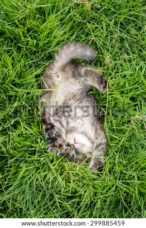 Cute tabby kitten lying on green grass - stock photo