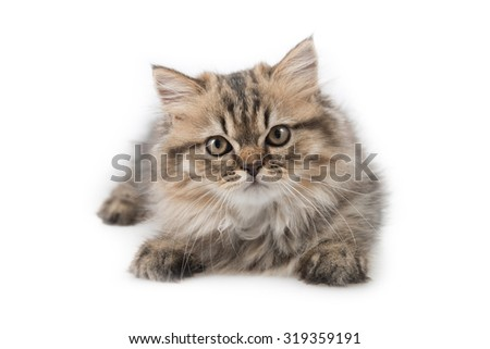 Cute tabby kitten on white background - stock photo