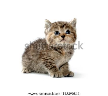 Cute tabby kitten on whitebackground - stock photo