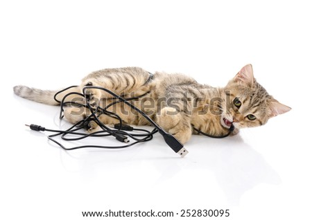 Cute tabby kitten playing on white background isolated - stock photo