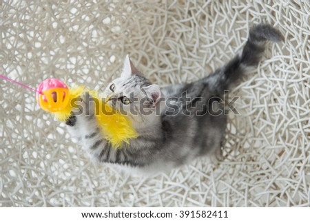 Cute tabby kitten playing toy on white basket chair - stock photo