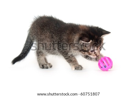 Cute tabby kitten playing with pink toy on white