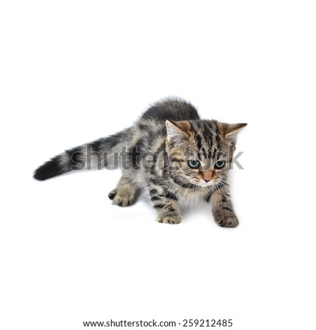 Cute  tabby kitten plays with toy - stock photo