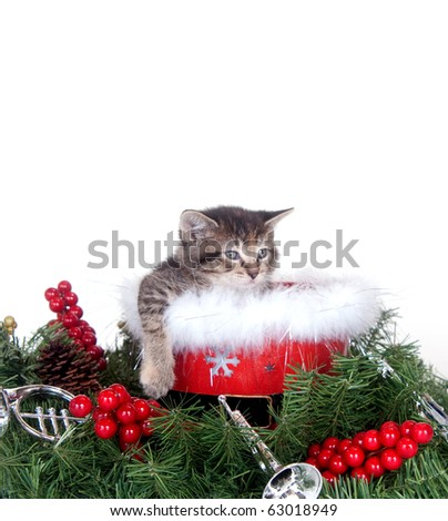 Cute tabby kitten sitting among Christmas decorations on white background - stock photo