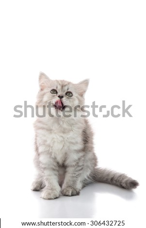 Cute tabby kitten sitting and licking lips up on white background isolated