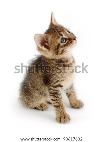 cute tabby kitten sitting and looking up, isolated on white - stock photo