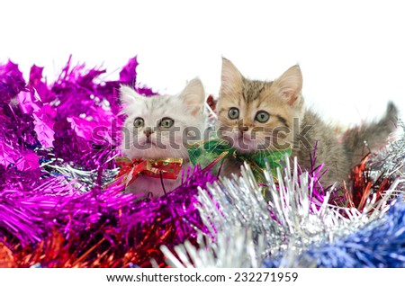 Cute tabby kitten sitting in colorful tinsel on white background - stock photo