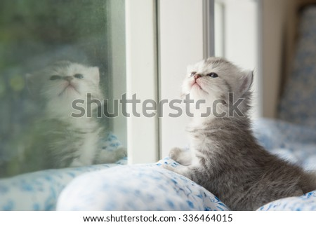 Cute tabby kitten sitting looking out the window - stock photo