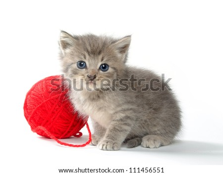 Cute tabby kitten sitting next to red ball of yarn