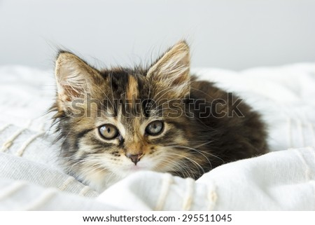Cute tabby kitten sitting on the bed cover - stock photo