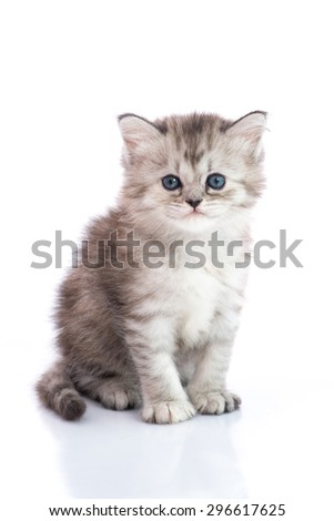 Cute tabby kitten sitting on white background isolated