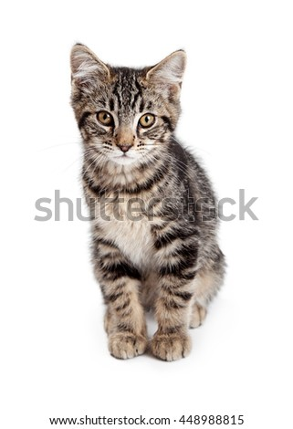 Cute tabby kitten sitting on white looking forward into camera