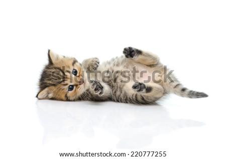 Cute tabby kitten walking on white background isolate - stock photo