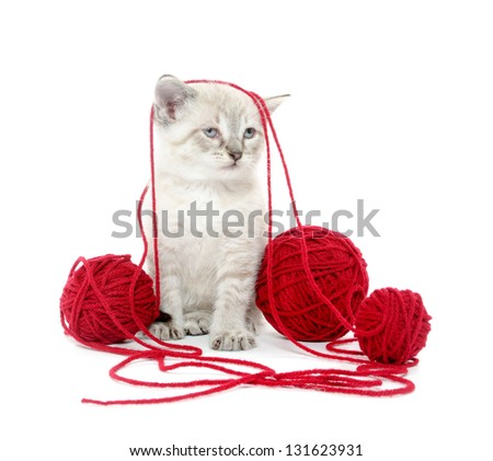 Cute tabby kitten with ball of yarn on white background