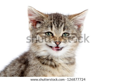 Cute tabby kitten with its mouth open and smiling on white background