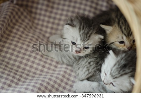 Cute tabby kittens lying in a basket