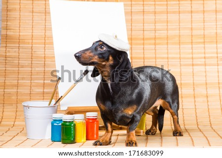 cute talented dachshund in hat of artist at easel with  clean canvas ready to paint picture by paints - stock photo