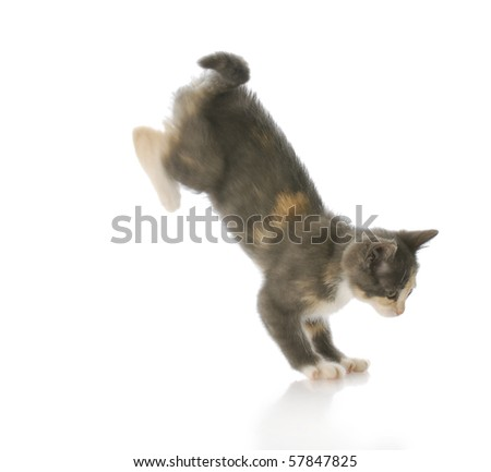 cute ten week old kitten jumping down with motion blur - stock photo