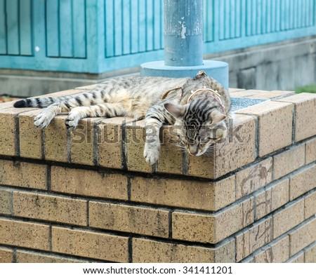 Cute Tiger (Tabby) Cat Sleeping on The Grunge Brick Stone Pillar for Relaxing under The Sun  - stock photo