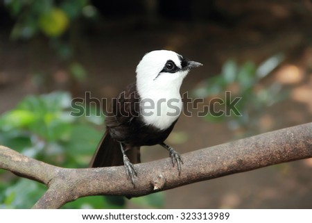 Cute tiny black and white bird sitting on a tree branch - stock photo