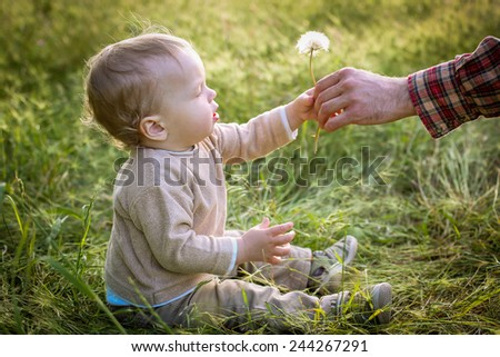 Cute Toddler boy looks at the nature of the dandelion - stock photo