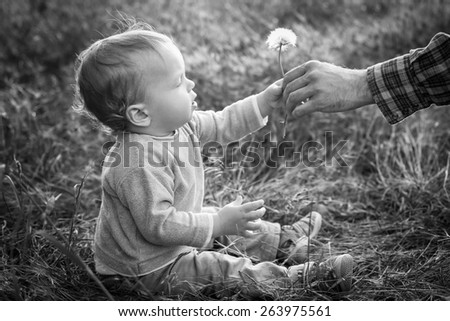 Cute Toddler boy looks at the nature of the dandelion ( black and white ) - stock photo