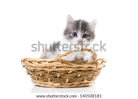 Cute tricolor kitten in a basket isolated on white background - stock photo